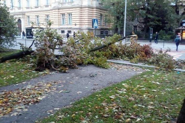 Во Львове прошла буря, дороги частично перекрыты