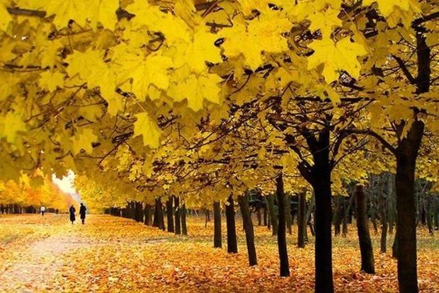 Що необхідно встигнути зробити восени всім знакам Зодіаку