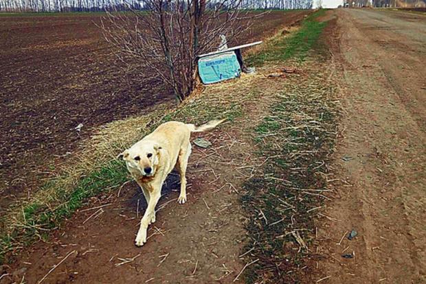 Трогательно до слез: Украинский Хатико ждет хозяина, который оставил его в поле