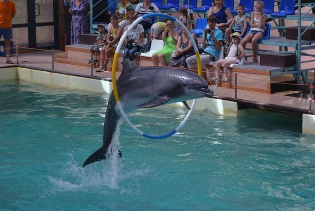 Эколог: Индия запретила дельфинарии – в Украине в них погибает 80 особей
