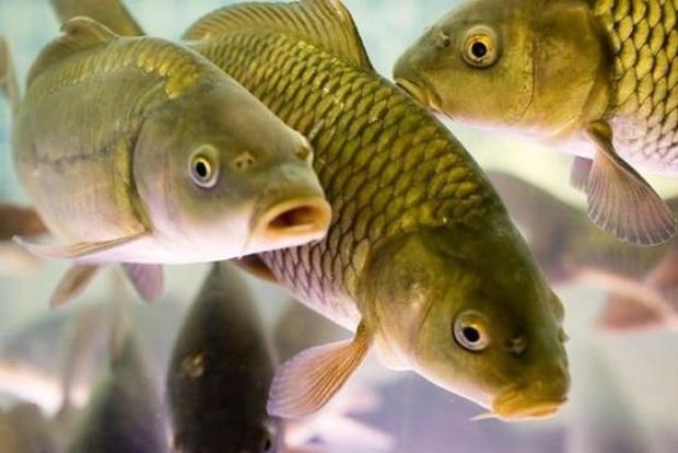 Якщо хочеш бути здоровим: Рибу купувати тільки живу, від шаурми відмовитися назавжди