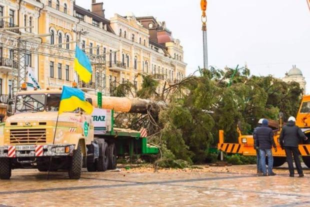 Киевлян шокировала полулысая елка