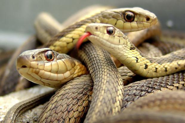 Почему нельзя убивать змей. Народные поверья
