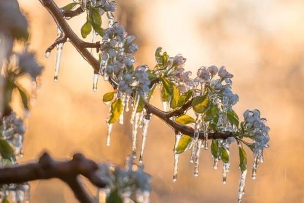 Непогода уничтожила больше половины урожая плодовых деревьев в трех областях