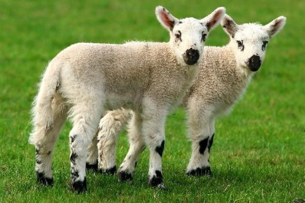В Китае будут клонировать животных и поднимать экономику страны