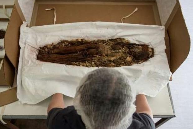 Чилийские ученые расшифровали ДНК древнейших мумий на Земле