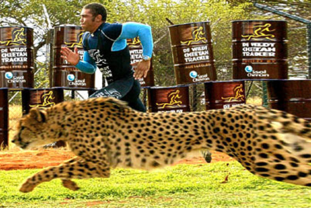 На перегонки с акулой, гепардом или зеброй.  Самые необычные состязания звезд спорта с природой