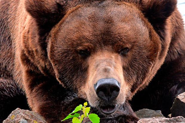 В Сочи медведи затащили в вольер 11-летнего ребенка и загрызли его