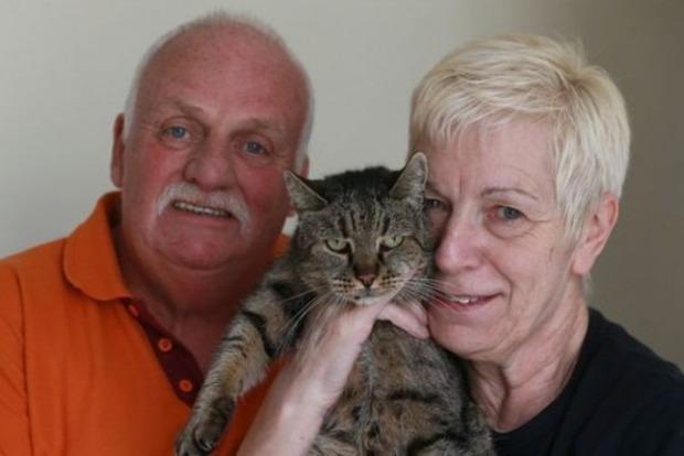 В Великобритании в возрасте 32 лет умер самый старый кот планеты