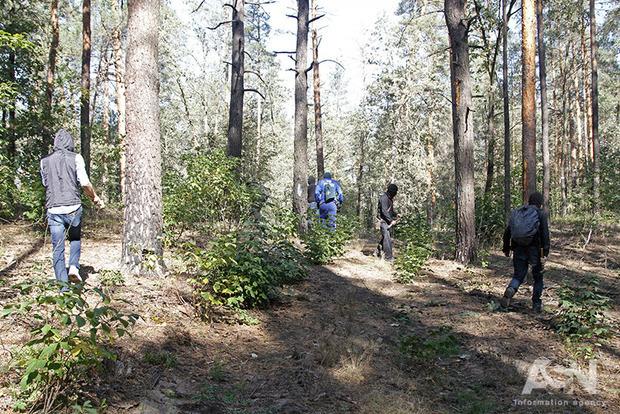 Не вырубкой – так засухой: на Полесье массово усыхает лес