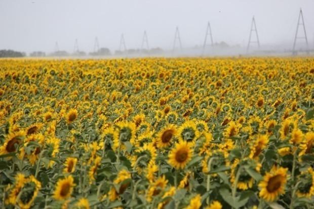 Украинские аграрии потеряют 10 миллиардов гривен