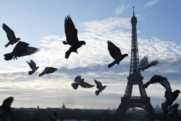 Соколы спасут Париж от нашествия летающих крыс