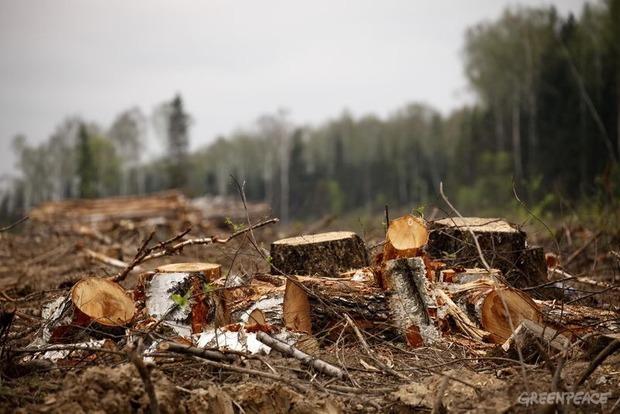 «Паливная» древесина: Гройсман обещал проверить лесхозы, а за вырубку сажать в тюрьму
