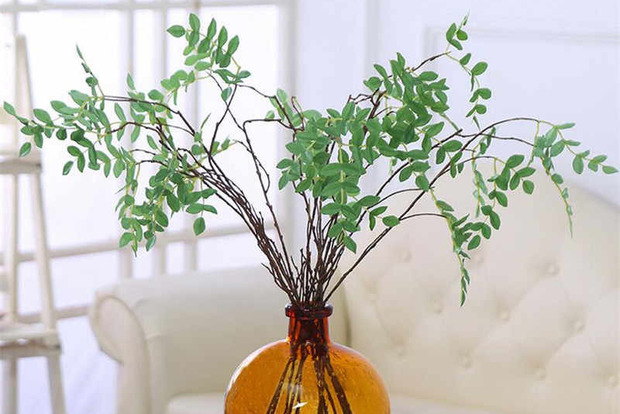 Растения, которые стоит убрать из дома, чтобы избавиться от бед и безденежья