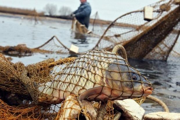 Абсолютный рекорд. В Киеве поймали 89-летнюю браконьершу