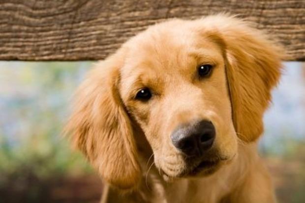 На Полтавщине ищут маньяка, зверски убивающего собак