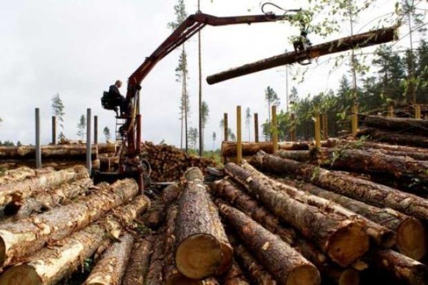 Минэкономразвития хочет отменить мораторий на экспорт леса