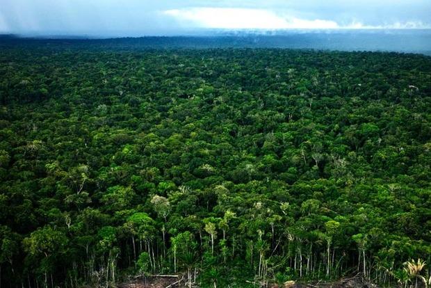 В Бразилии растут объемы незаконной вырубки лесов