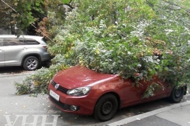 В Киеве упавшее дерево повредило несколько автомобилей