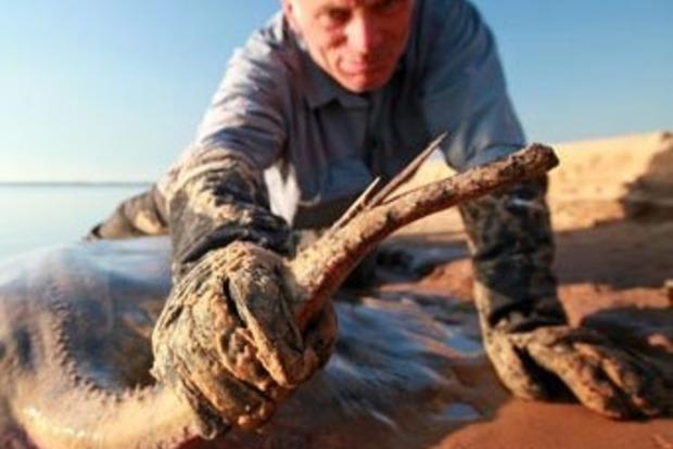 Мертвая хватка: морской скат чуть не оторвал член купальщику (видео)