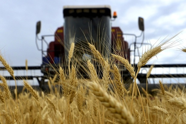 Товарооборот в аграрной сфере между Украиной и Египтом достиг $1 млрд