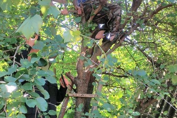В Запорожской области 81-летний мужчина залез на дерево и не смог спуститься