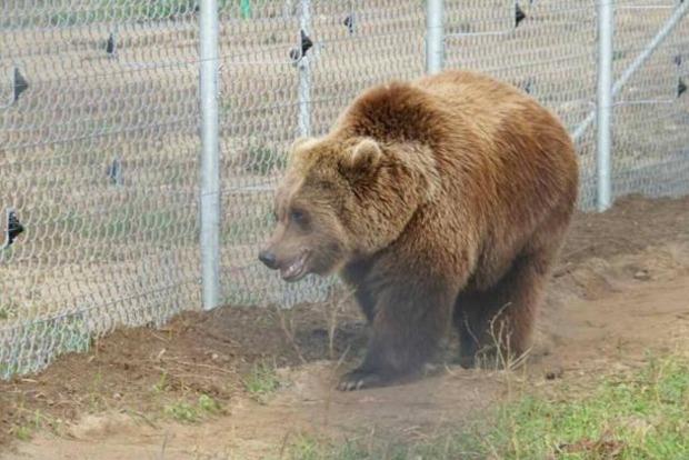 Приют для цирковых медведей открыли в Львовской области
