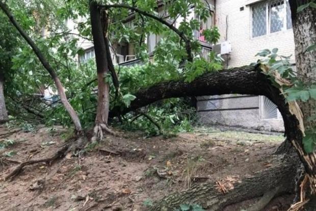Несчастье помогло: Киевзеленстрой сделает из поваленных в грозу деревьев кое-что интересное