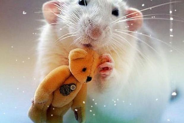 Кого в 2020-м году Белая крыса одарит подарками больше всех