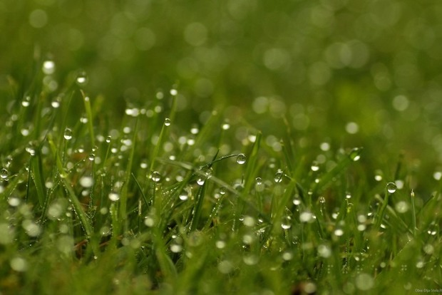 В Харькове 17-летняя девушка погибла на аттракционе из-за мокрой травы