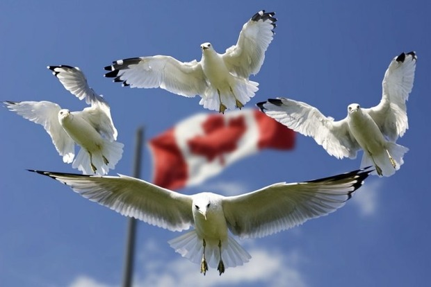 Работа в Канаде: как найти подходящую вакансию и сколько можно зарабатывать