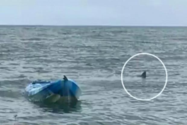 Чтобы съесть: Акула подкинула молодую девушку в воздух