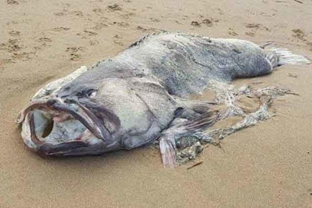 Отдыхающие на береге люди обнаружили двухметровую рыбу-монстра