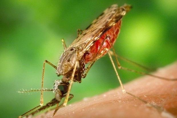 В Индии обнаружили вирус Зика