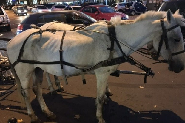 Тощая и едва дышит. В Одессе туристов развлекает полуживая лошадь
