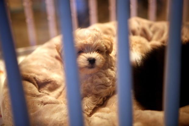 Калифорния запретит разводить животных. Взять можно будет только из питомников для бездомных