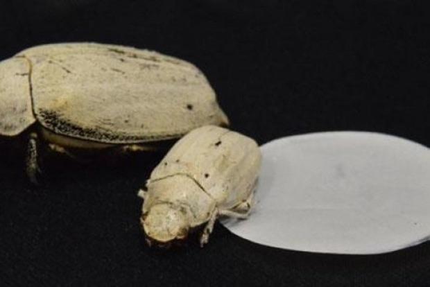 Ученые создали самый белый в мире материал при помощи жуков