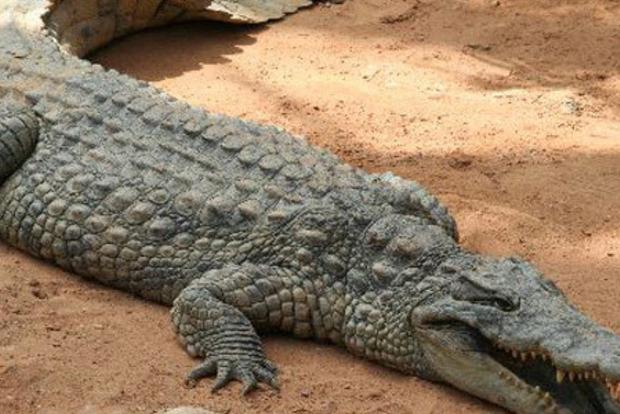 В Китае мужчина прогулялся по улице с крокодилом, а потом зажарил его