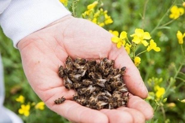Вимерли всі: на Дніпропетровщині через фермерські хімікати загинули бджоли