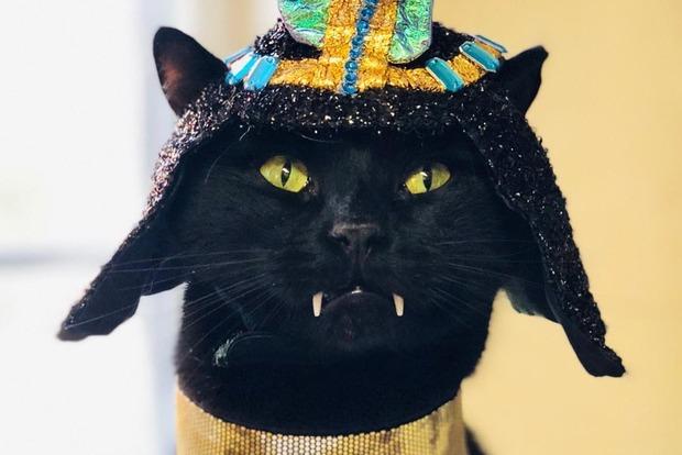 Черный кот-упырь стал звездой Сети