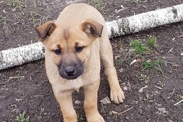В центре Кропивницкого изверги изуродовали щенка