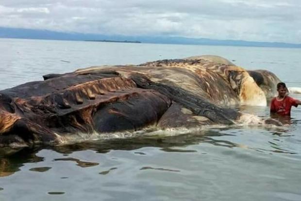 Експерти розгадали таємницю 35-тонної морської істоти в Індонезії