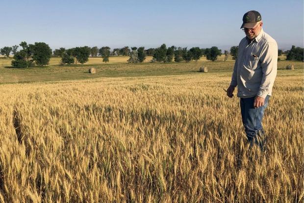 Небывалая засуха уничтожает скот и урожай в американских штатах Монтана, Северная и Южная Дакота