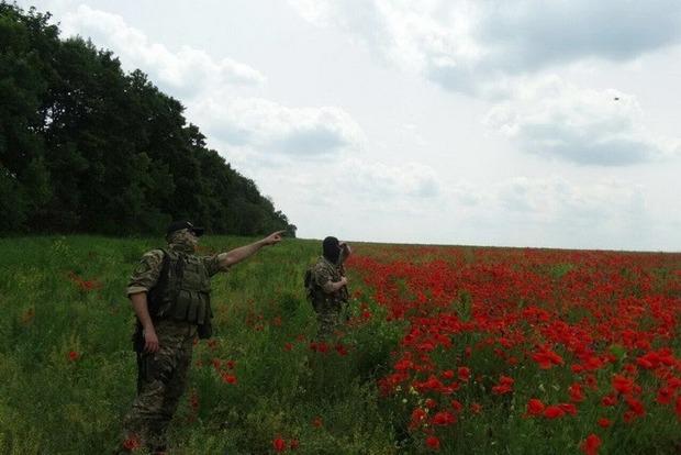 В Харьковской области найдено поле мака площадью почти 120 гектаров