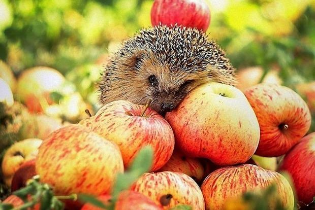 Яблочный Спас 19 августа: приметы, гадания, что святить и что нельзя делать