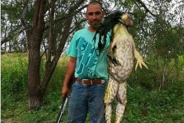 В США охотник поймал лягушку-быка ростом с человека