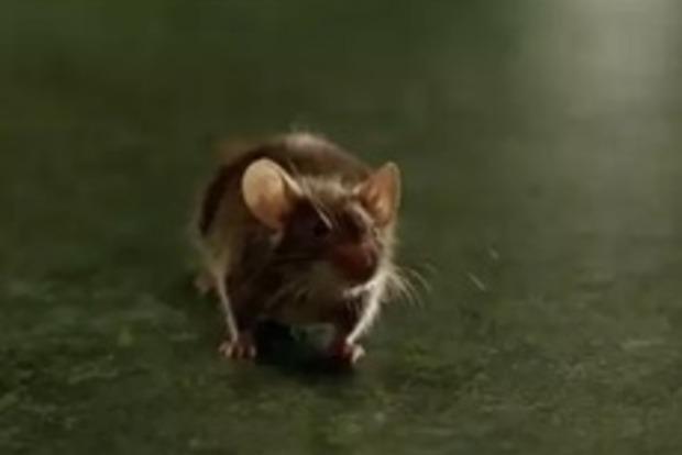 У бразильській в'язниці миша доставляла наркотики ув'язненим
