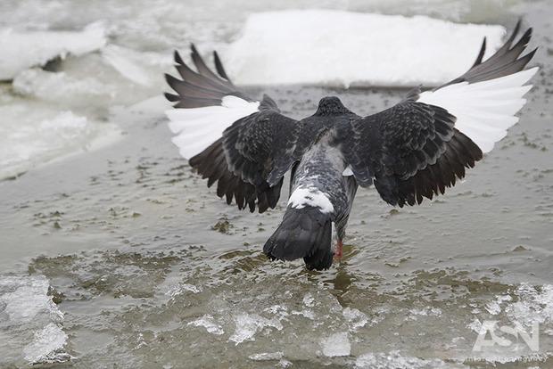 В Украине предупредили о дожде, снеге и гололеде