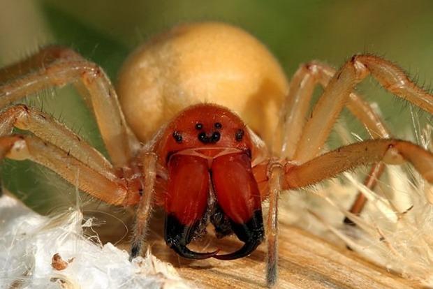 В Кривом Роге женщину укусил ядовитый паук