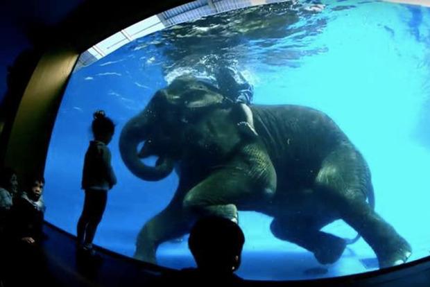 Как в Таиланде издеваются над слонами, чтобы сломать их волю на потеху туристам